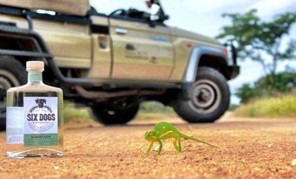 bouteille de six dog Karoo posé sur le sol à coté d'un caméléon